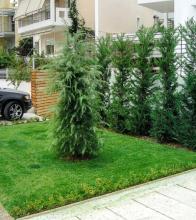 Κωνοφόρα δέντρα για φράχτη