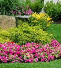 σύνθεση με καλλωπιστικούς θάμνους & εποχιακά φυτά στην πέτρα