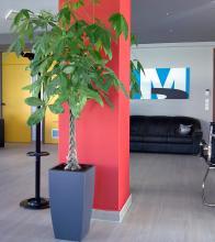 Φυτό εσωτερικού χώρου με αυτοποτιζόμενη γλάστρα σε γραφείο